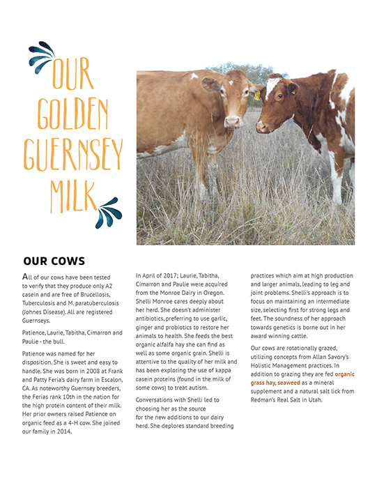 Golden Guernsey Cow / Raw Milk Brochure